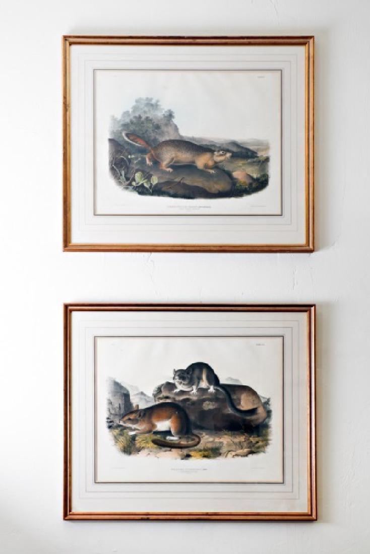 Pair, John James Audubon Bowen Edition Lithographs