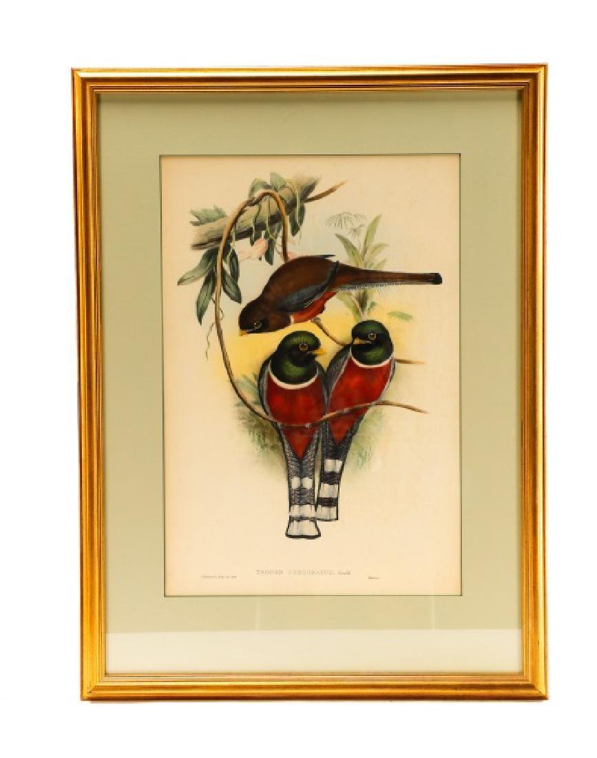 """John Gould, """"Trogan Personatus"""", Framed"""