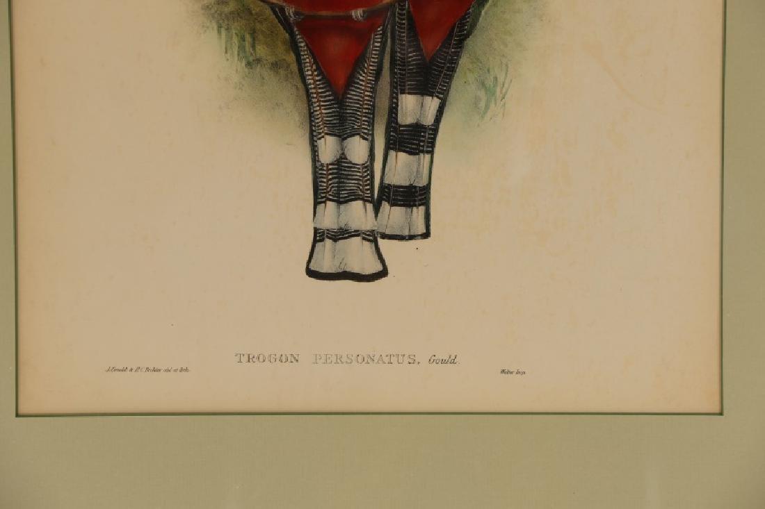 """John Gould, """"Trogan Personatus"""", Framed - 4"""
