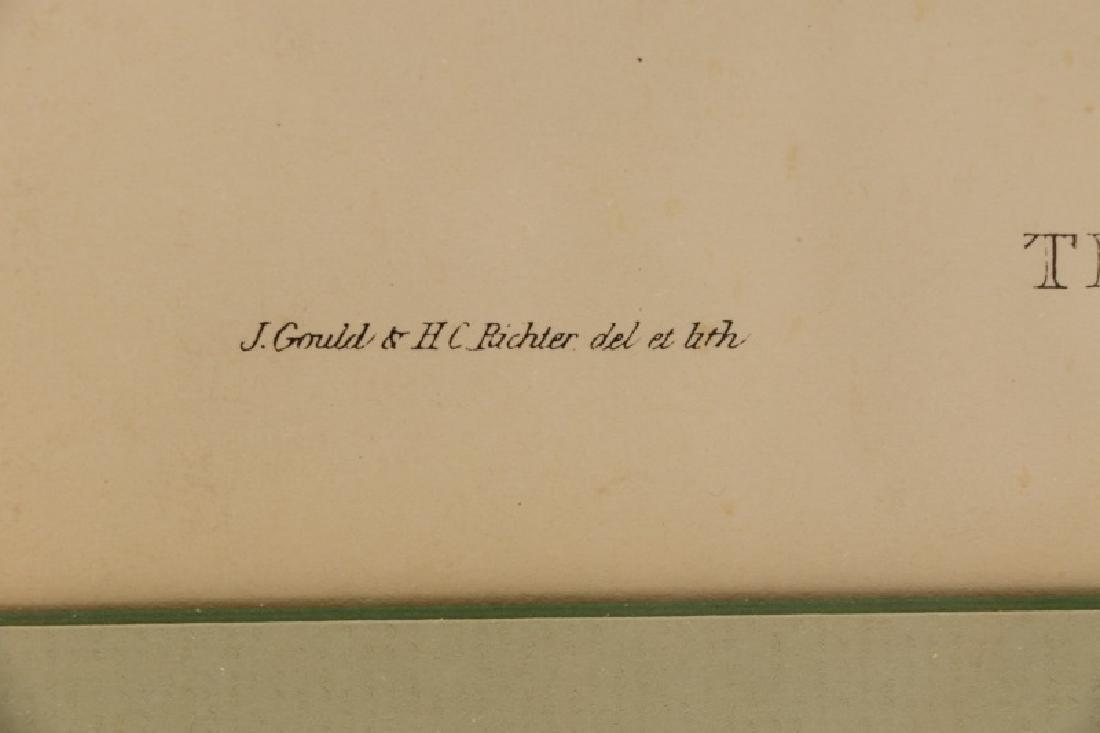 """John Gould, """"Trogan Personatus"""", Framed - 7"""