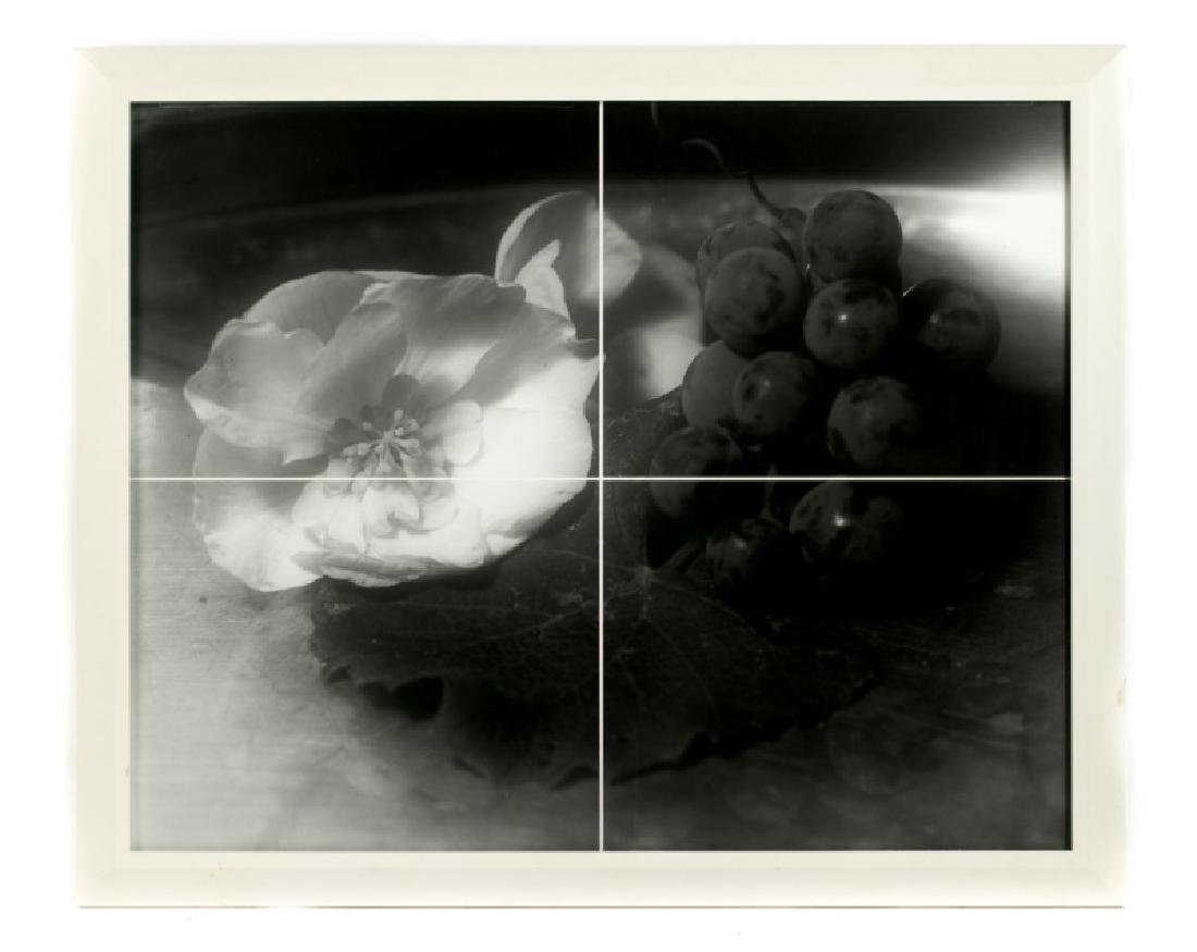 "Dennis Carey  ""Grapes and Begonia"", Gelatin Print"