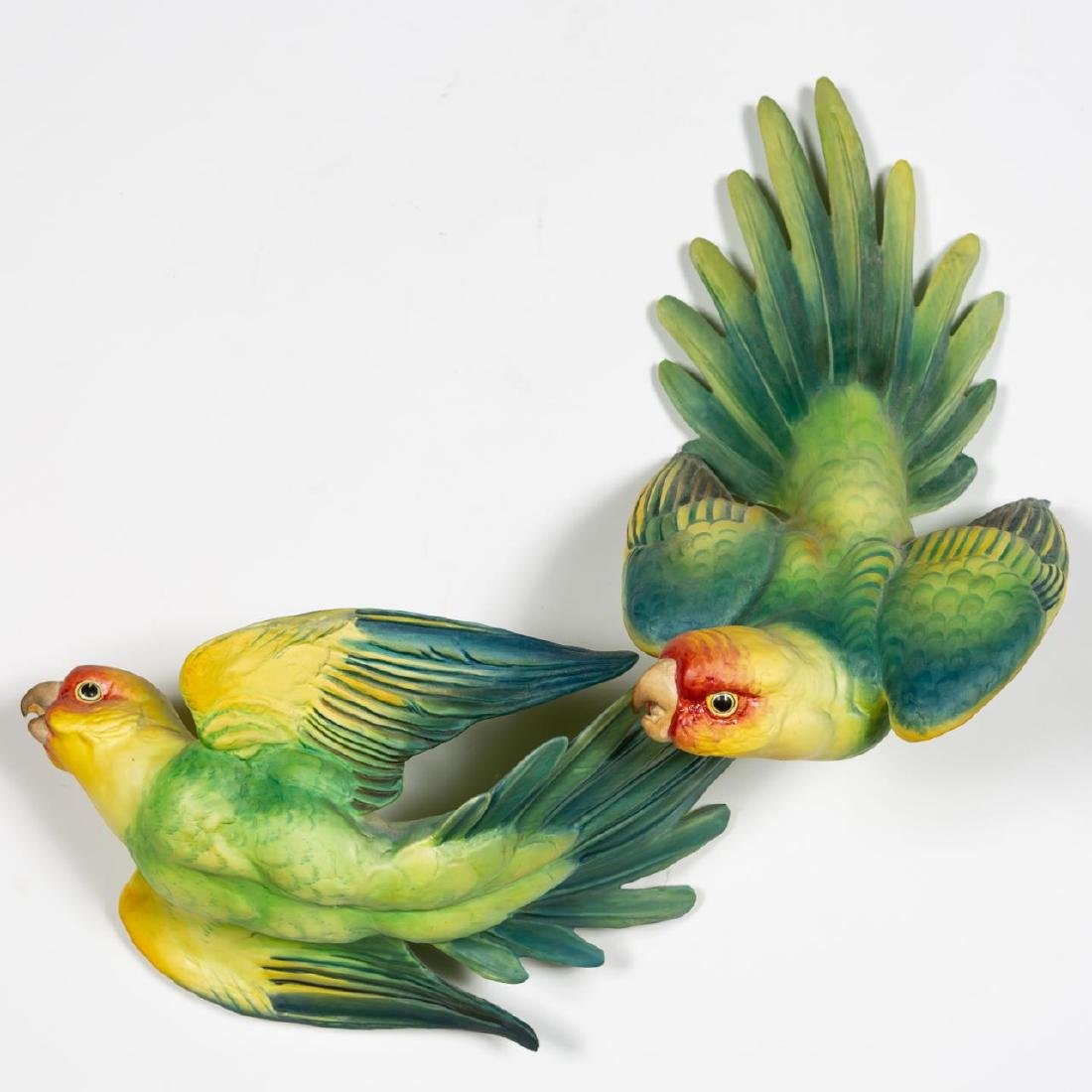Dorothy Doughty Carolina Parakeet w/ Original Box - 2
