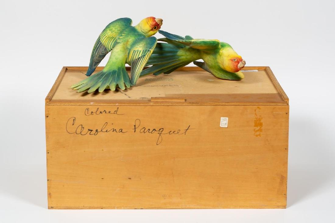 Dorothy Doughty Carolina Parakeet w/ Original Box - 5