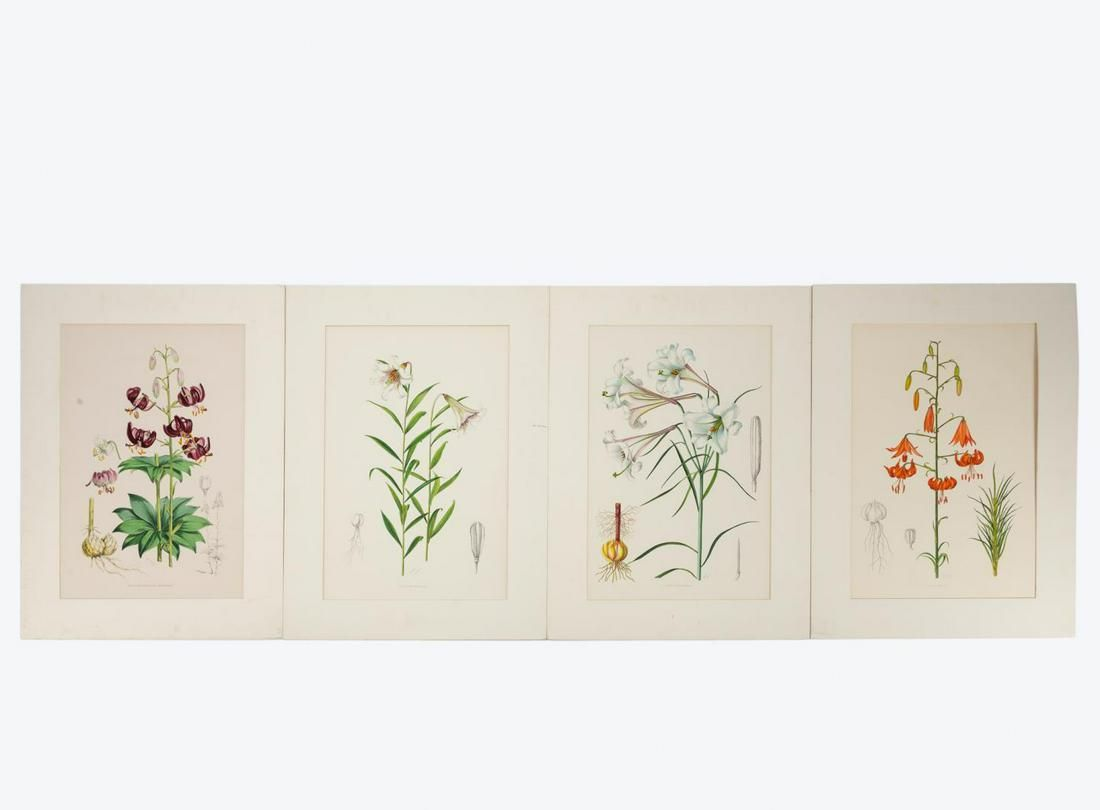 4 PCS, ELWES HAND COLORED LILY ENGRAVINGS, 1880