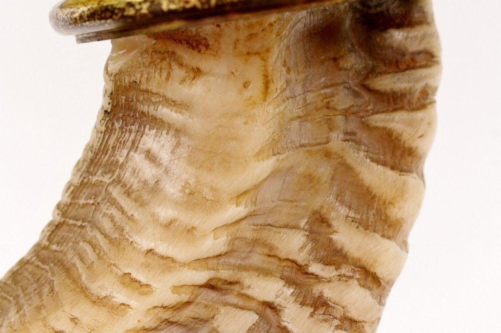 Chapman Ram's Horn & Brass Table Lamp - 8