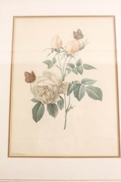 Collection of Four Redouté Framed Botanical Prints - 4
