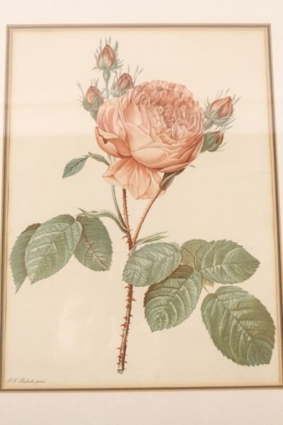 Collection of Four Redouté Framed Botanical Prints - 5
