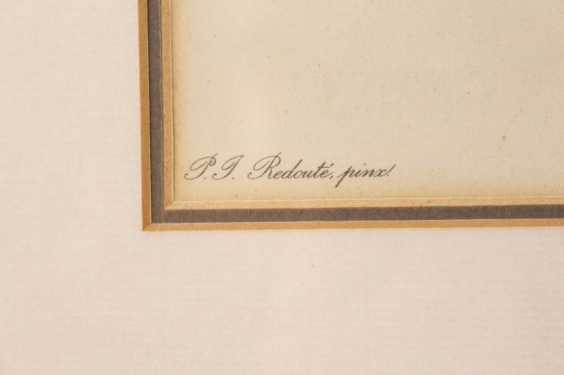 Collection of Four Redouté Framed Botanical Prints - 6