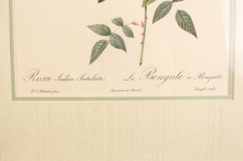 Collection of Four Redouté Framed Botanical Prints - 7