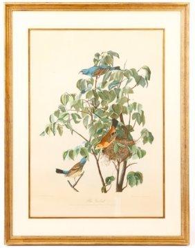John Audubon, Blue Grosbeak, Bien Ed. Plate 204