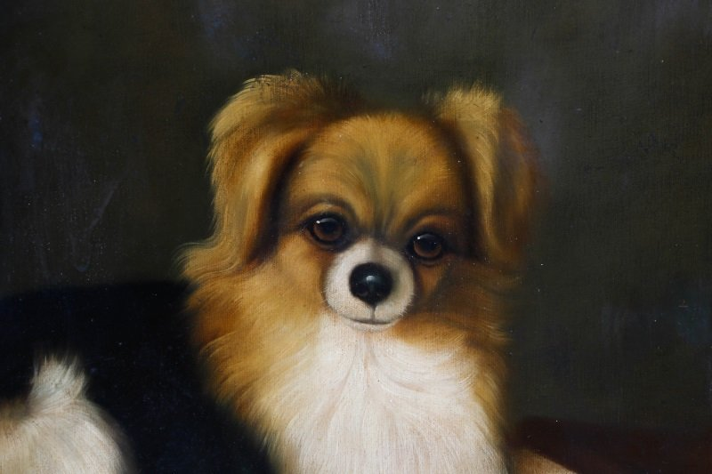 Style Of George Stubbs, Portrait Of Pomeranian - 3