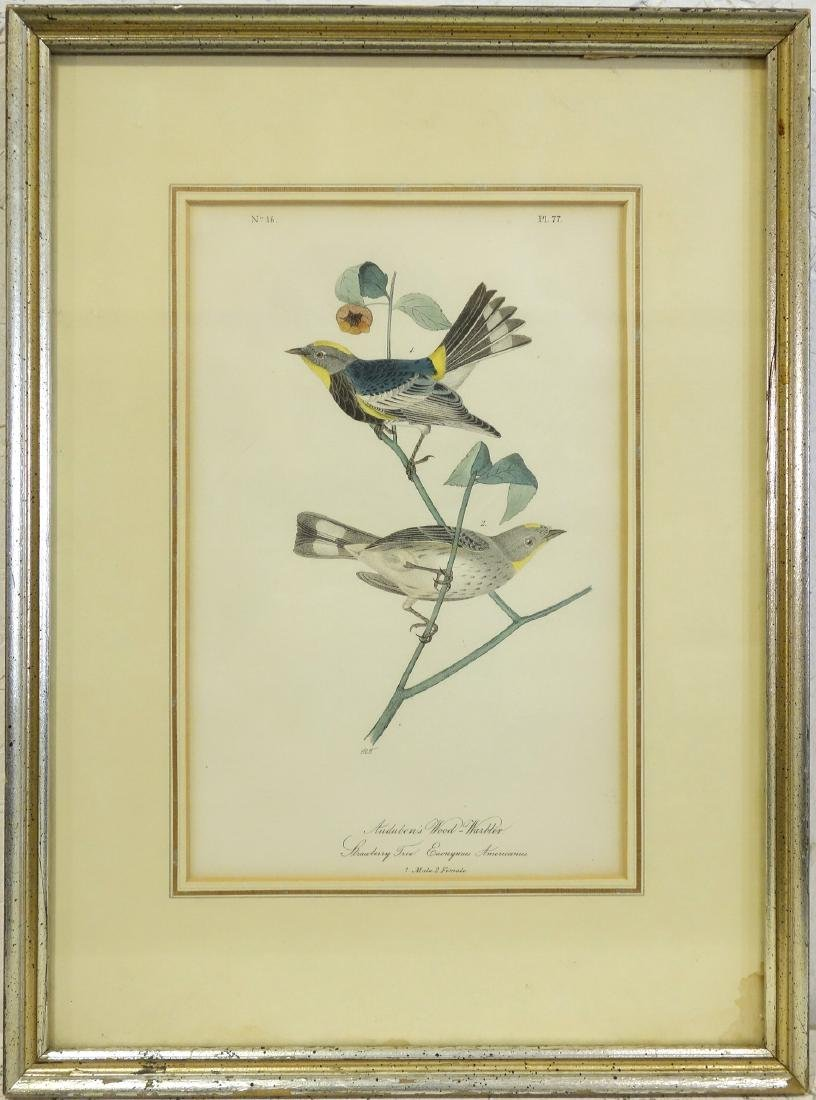 John James Audubon, Wood Warbler color lithograph