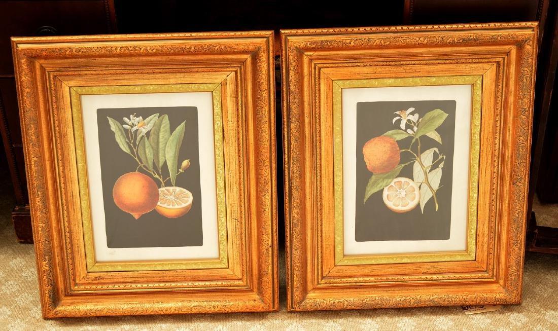 John-Richard, pair botanical fruit prints