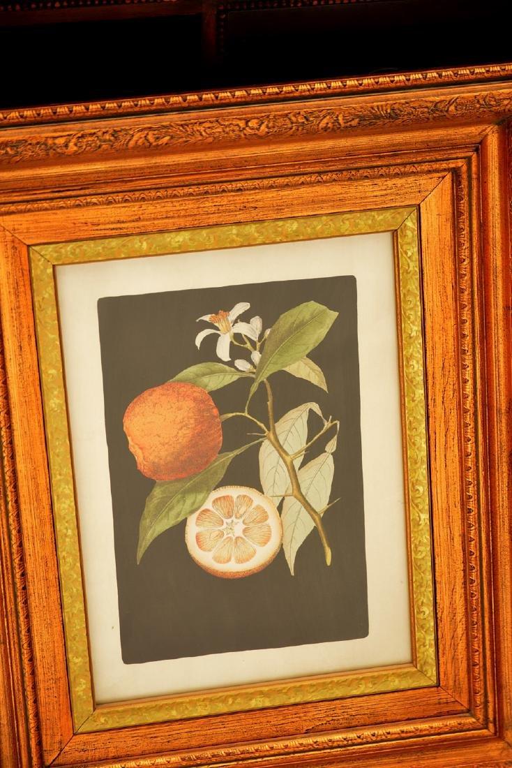 John-Richard, pair botanical fruit prints - 3