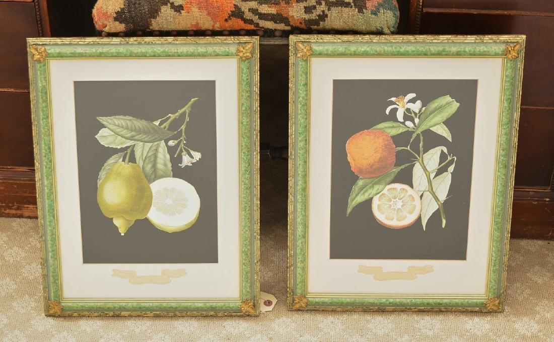 Chelsea House, pair botanical fruit lithographs