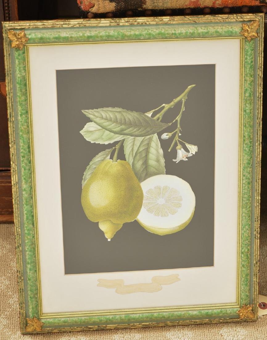Chelsea House, pair botanical fruit lithographs - 2