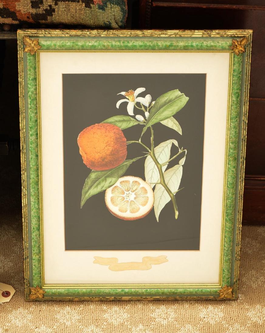 Chelsea House, pair botanical fruit lithographs - 3