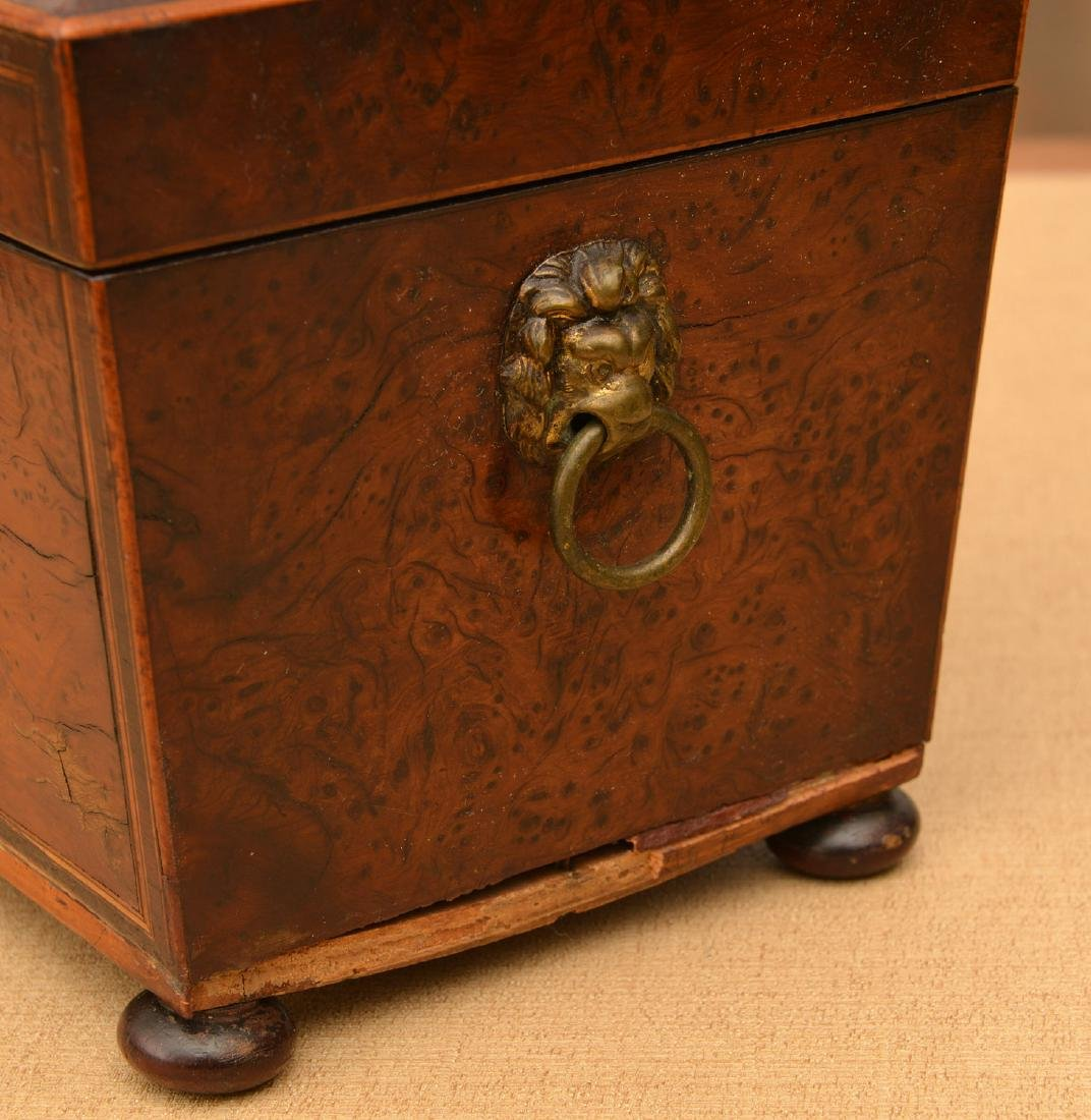 English Regency inlaid burlwood tea caddy - 5