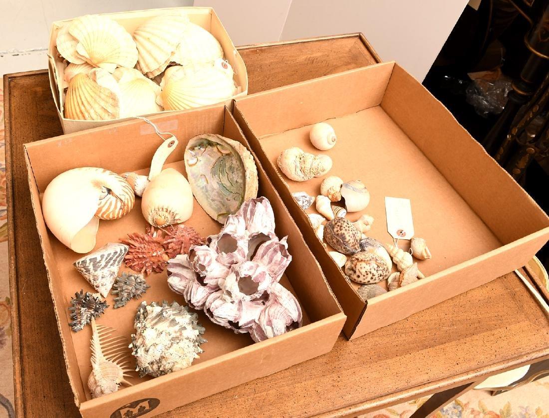 Nice beachcomer's shell collection