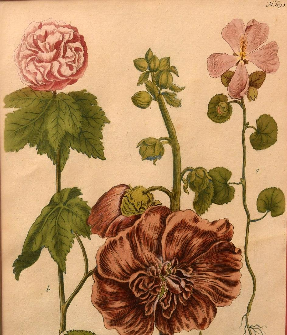 Pair highly decorative botanical prints - 2