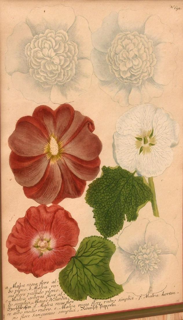 Pair highly decorative botanical prints - 3