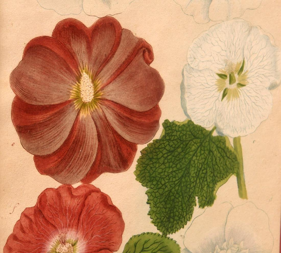 Pair highly decorative botanical prints - 4