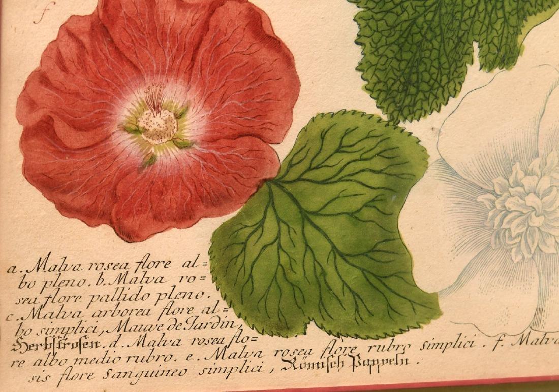 Pair highly decorative botanical prints - 5
