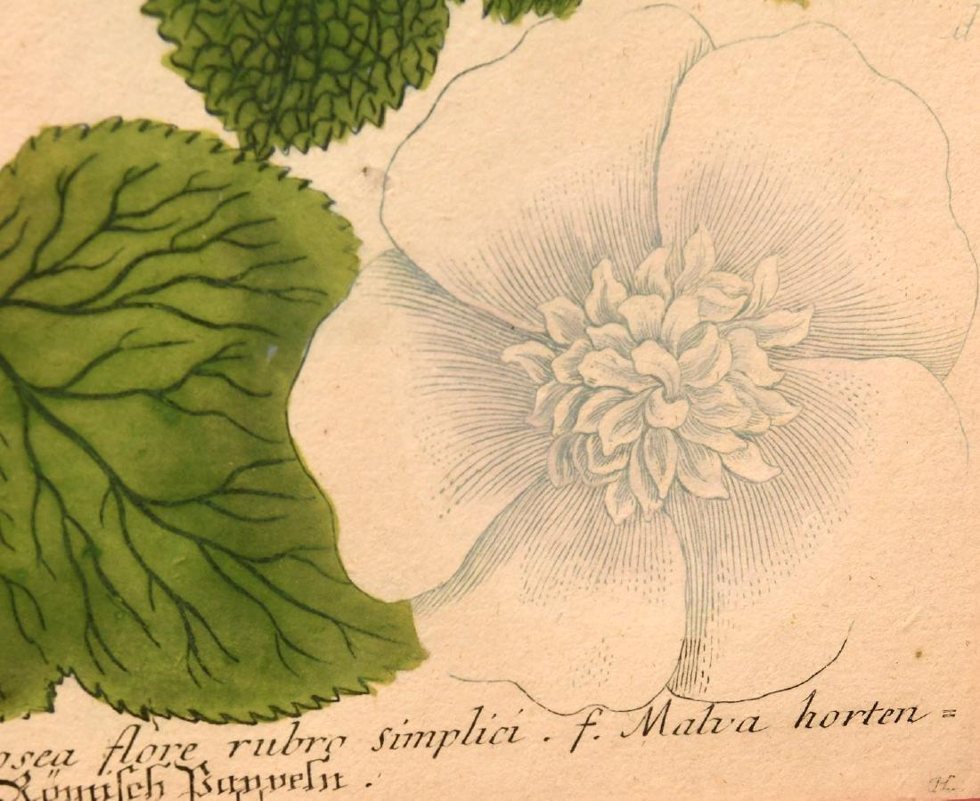 Pair highly decorative botanical prints - 6