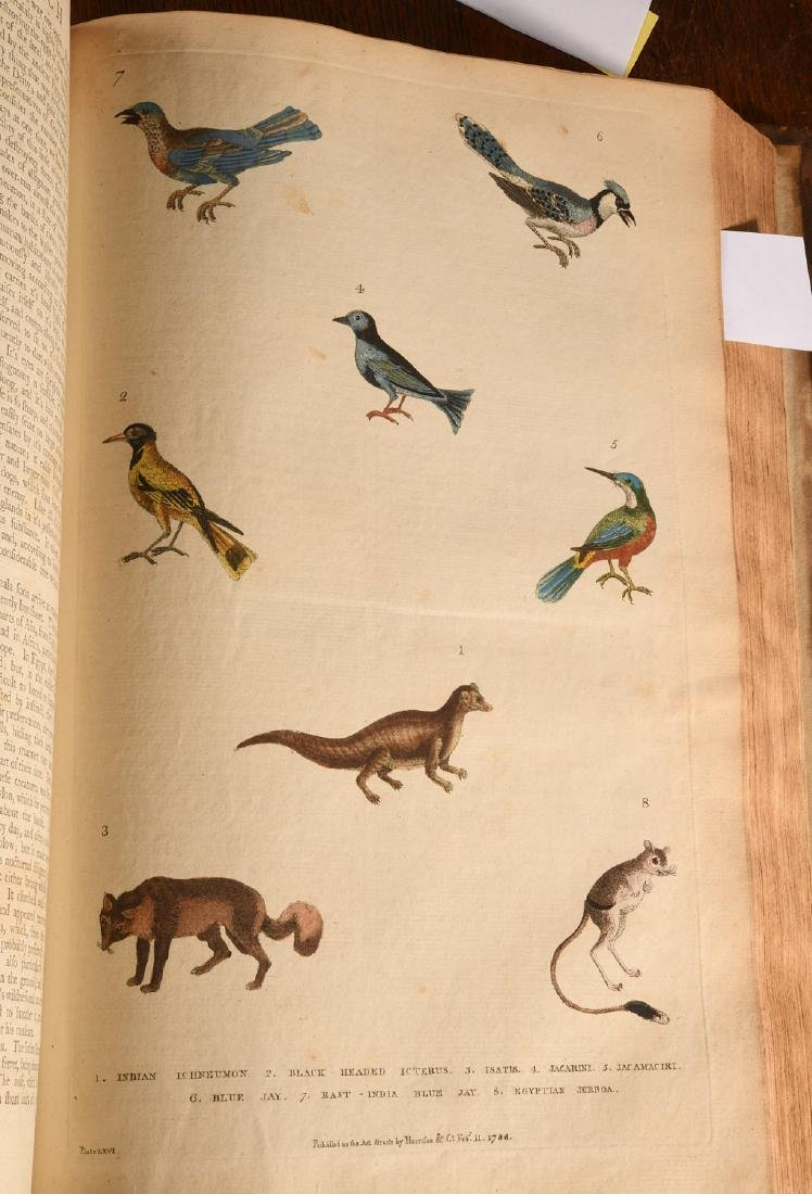 BOOKS: Martyn 1785 Dictionary of Natural History - 4