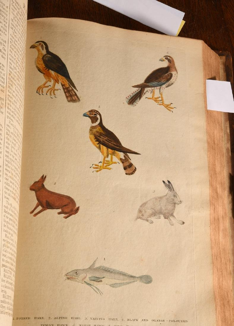 BOOKS: Martyn 1785 Dictionary of Natural History - 5