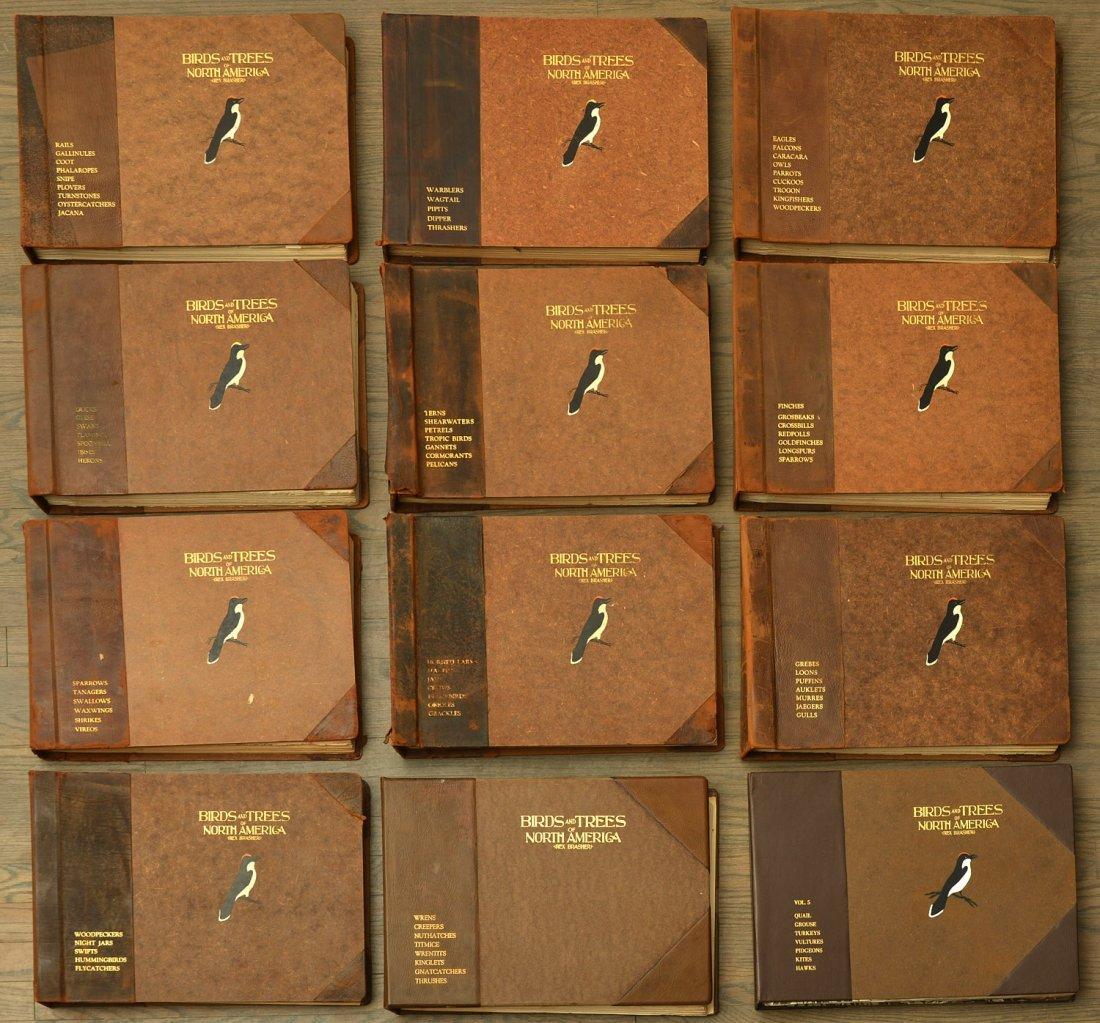 BOOKS: (12) Vols Brasher Birds & Trees 867 Plates