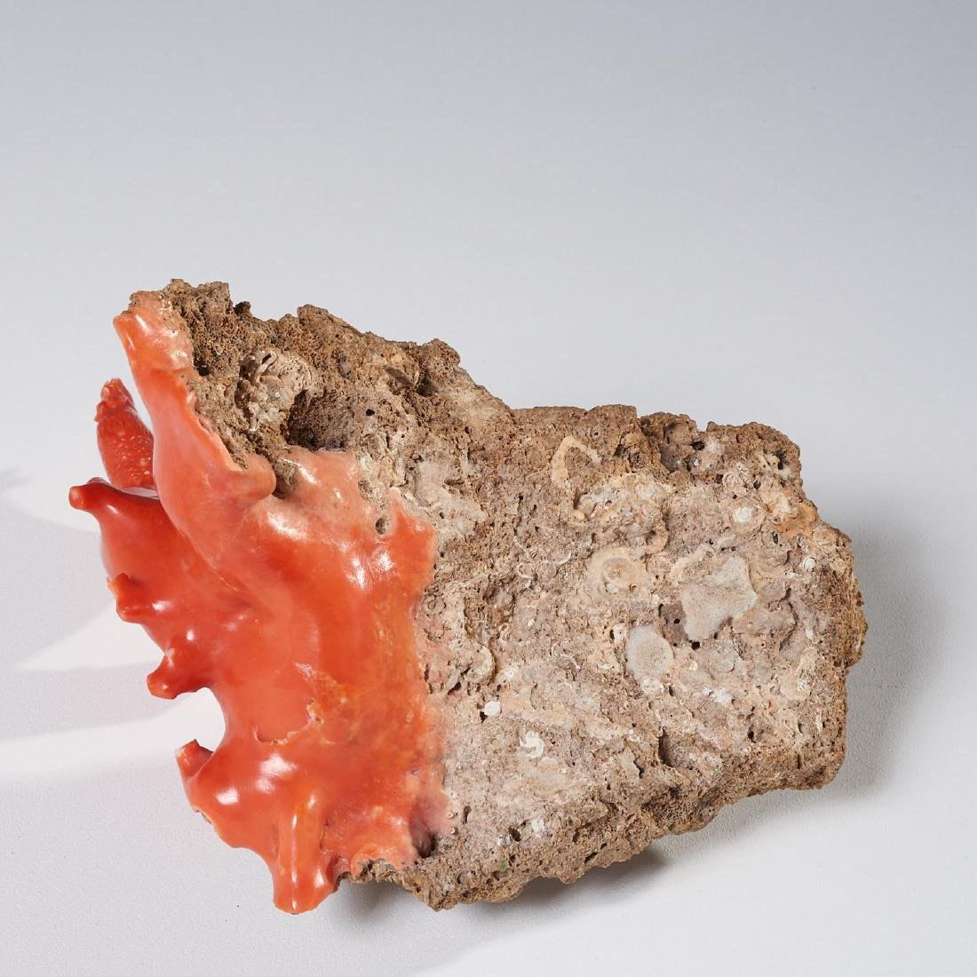 Chinese carved coral branch - 7