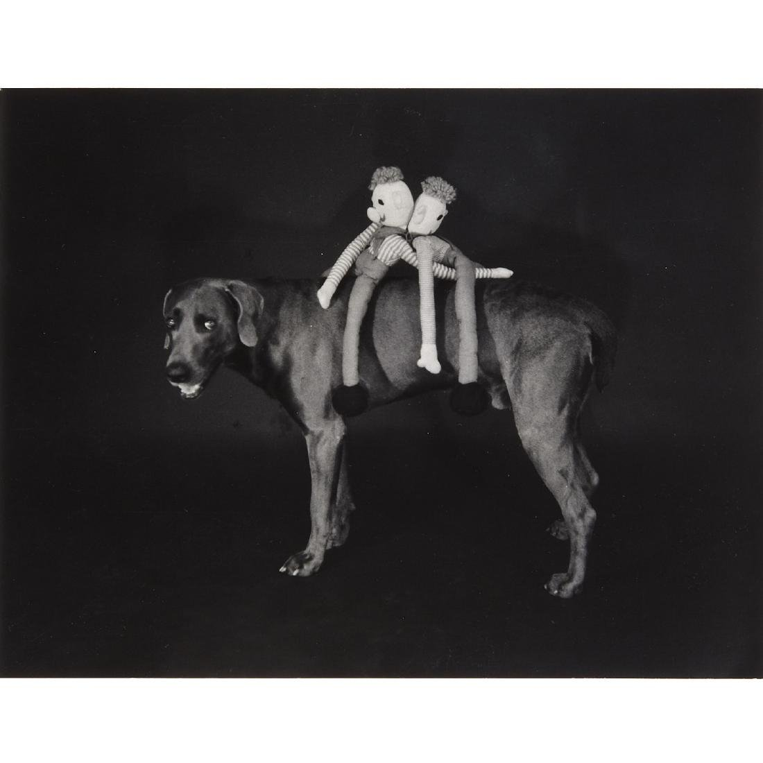 William Wegman, photograph