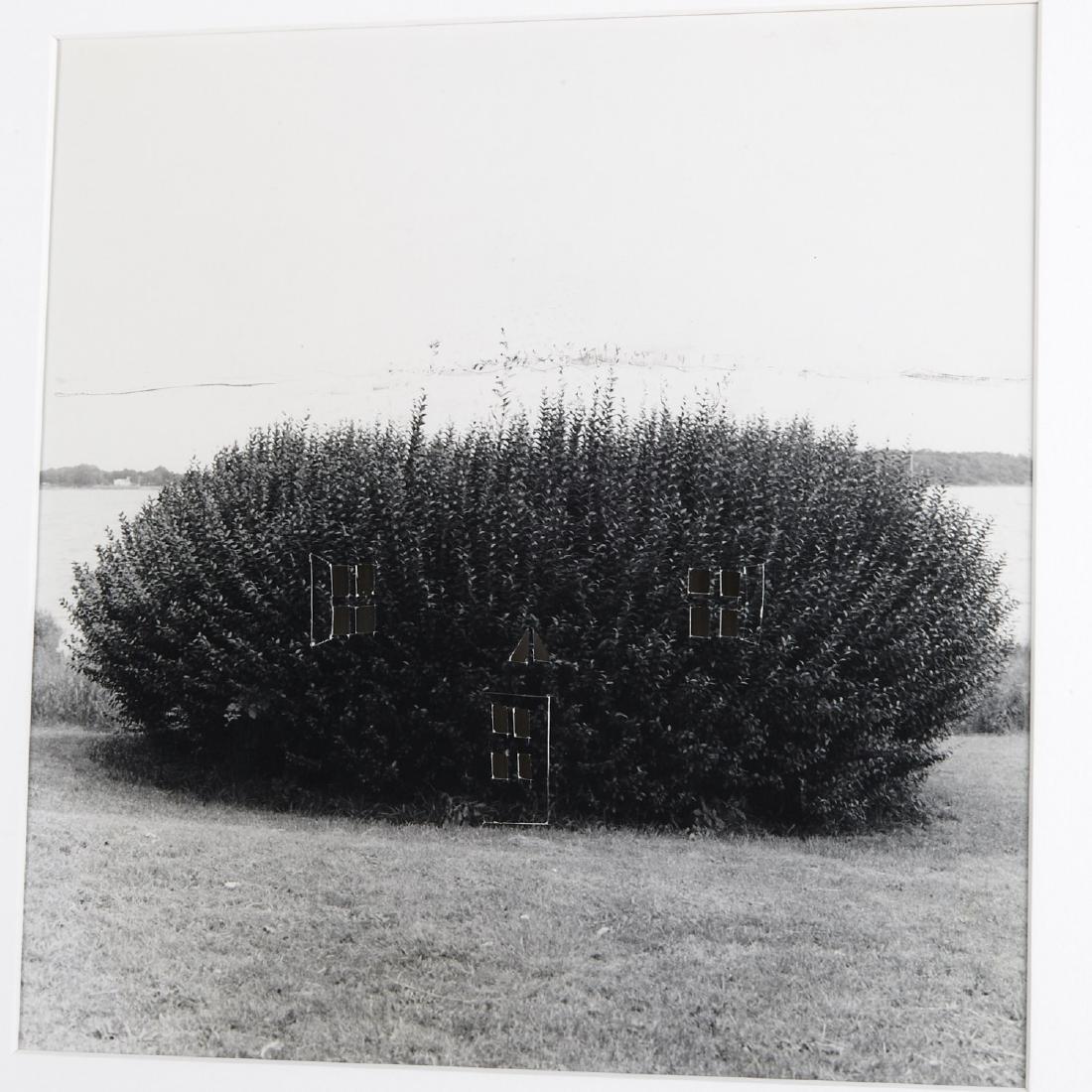 William Wegman, photograph - 2
