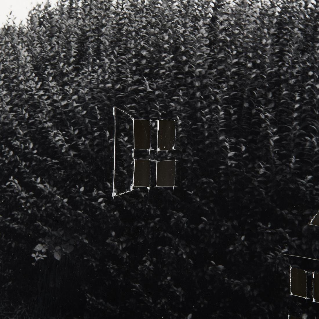 William Wegman, photograph - 3