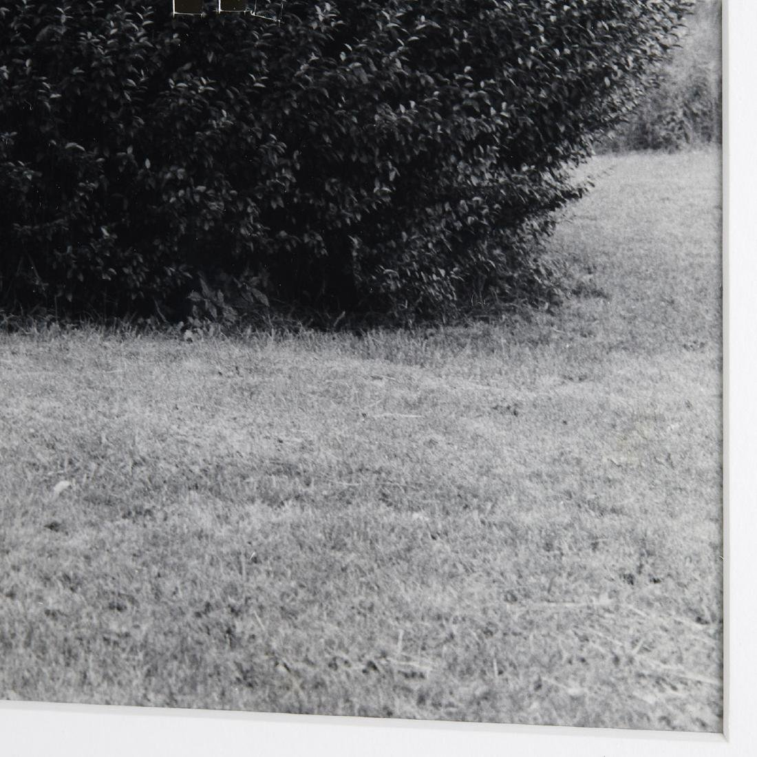 William Wegman, photograph - 5
