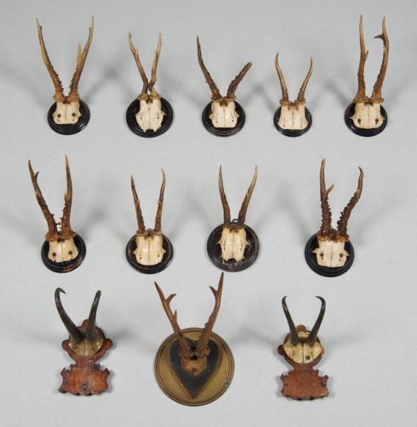 1238: Group (12) German Black Forest antler mounts