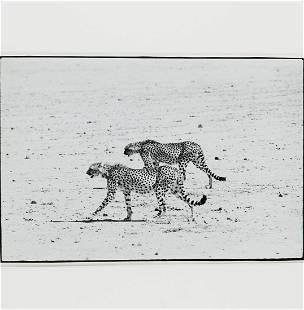 Peter Beard, framed photograph, stamped