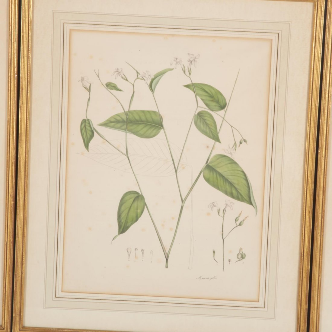 Set (12) antique French matted botanical prints - 3