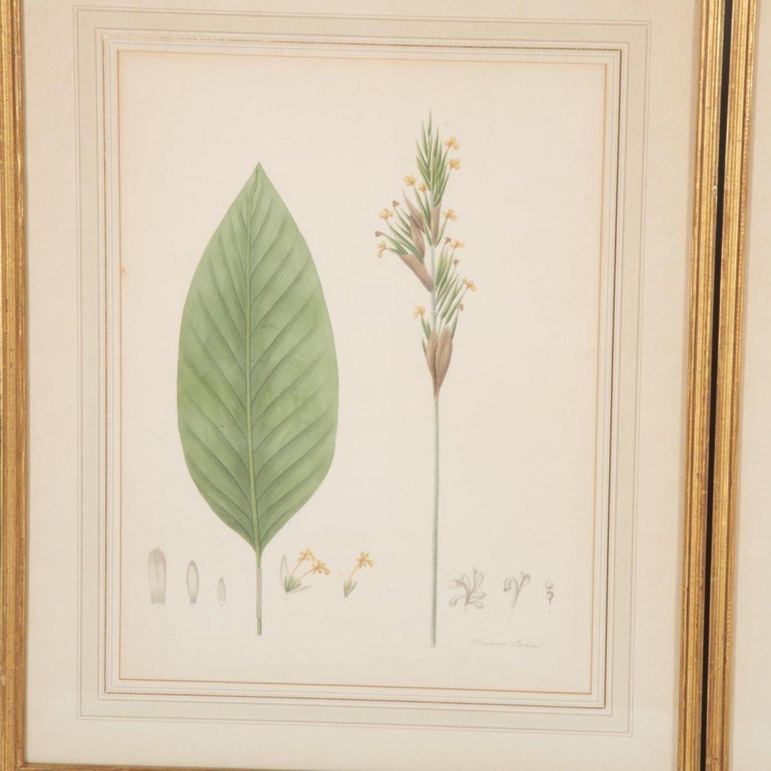 Set (12) antique French matted botanical prints - 4