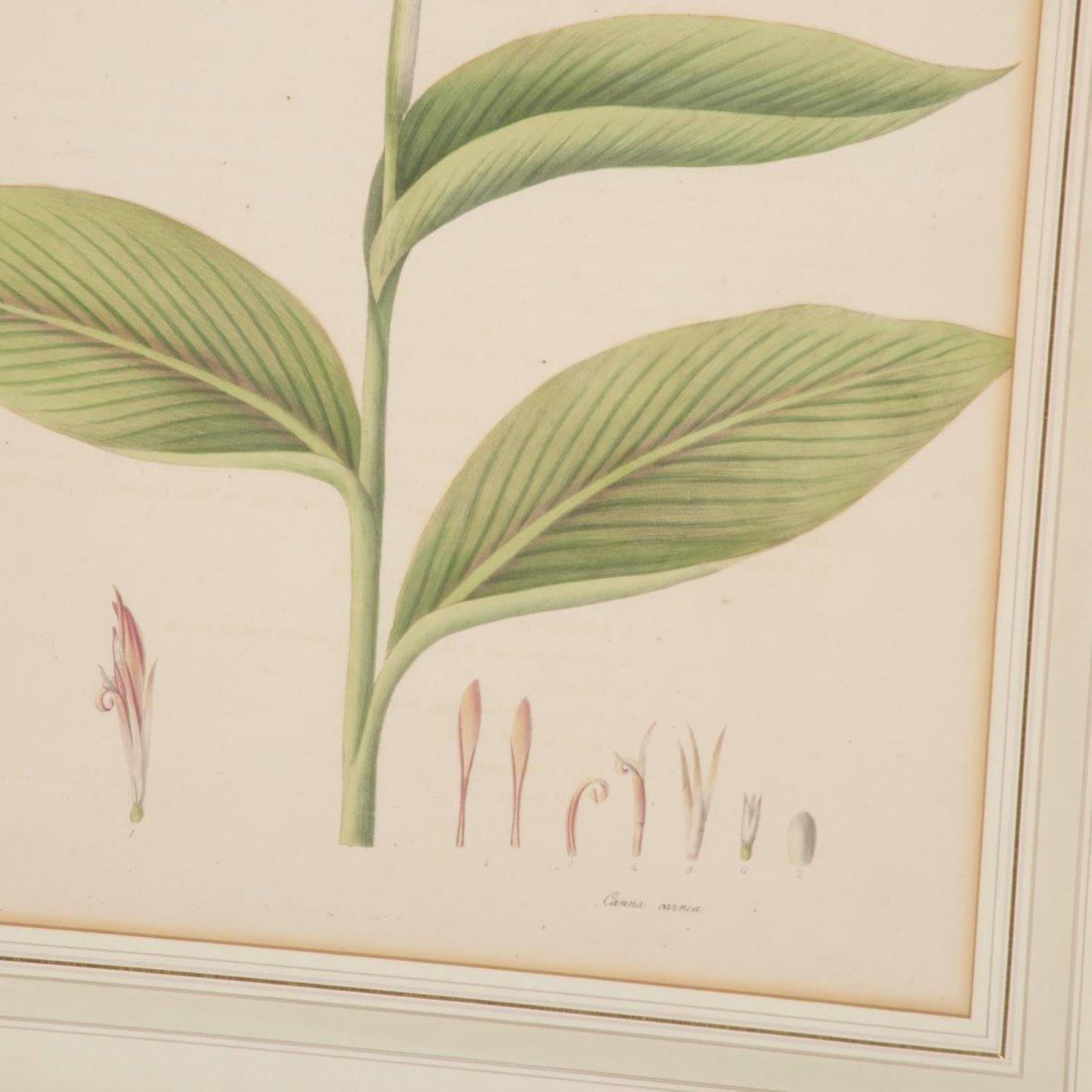 Set (12) antique French matted botanical prints - 5