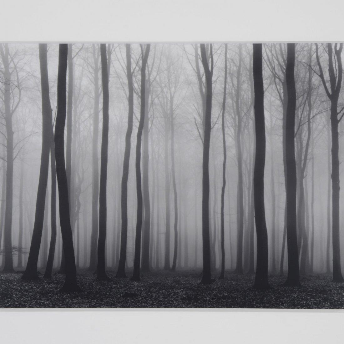 Vincent Vallarino, photograph - 2