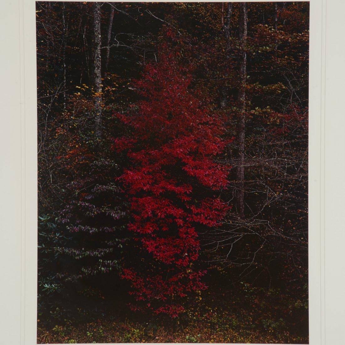 Eliot Porter, photograph - 2