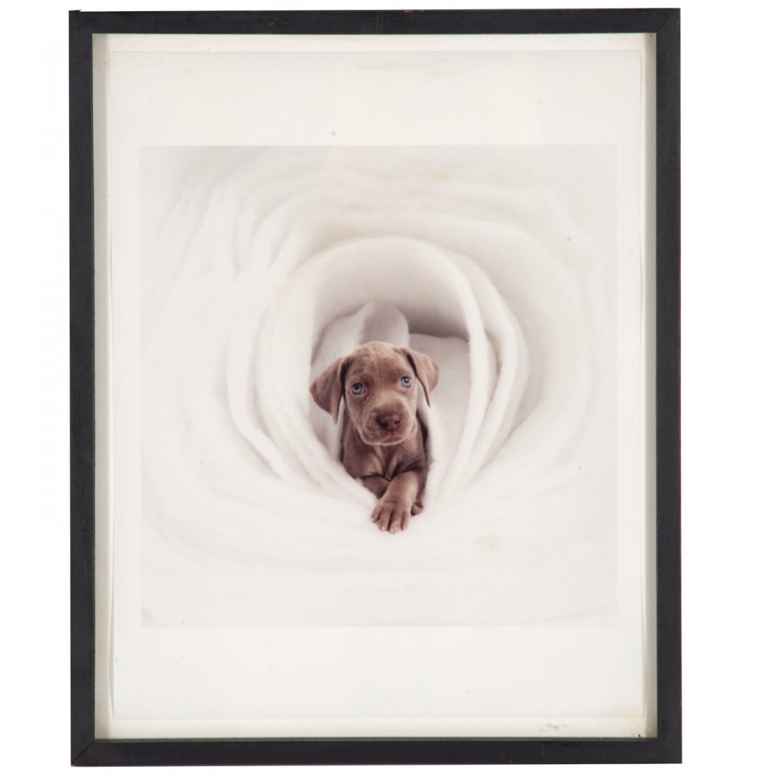 William Wegman, photograph