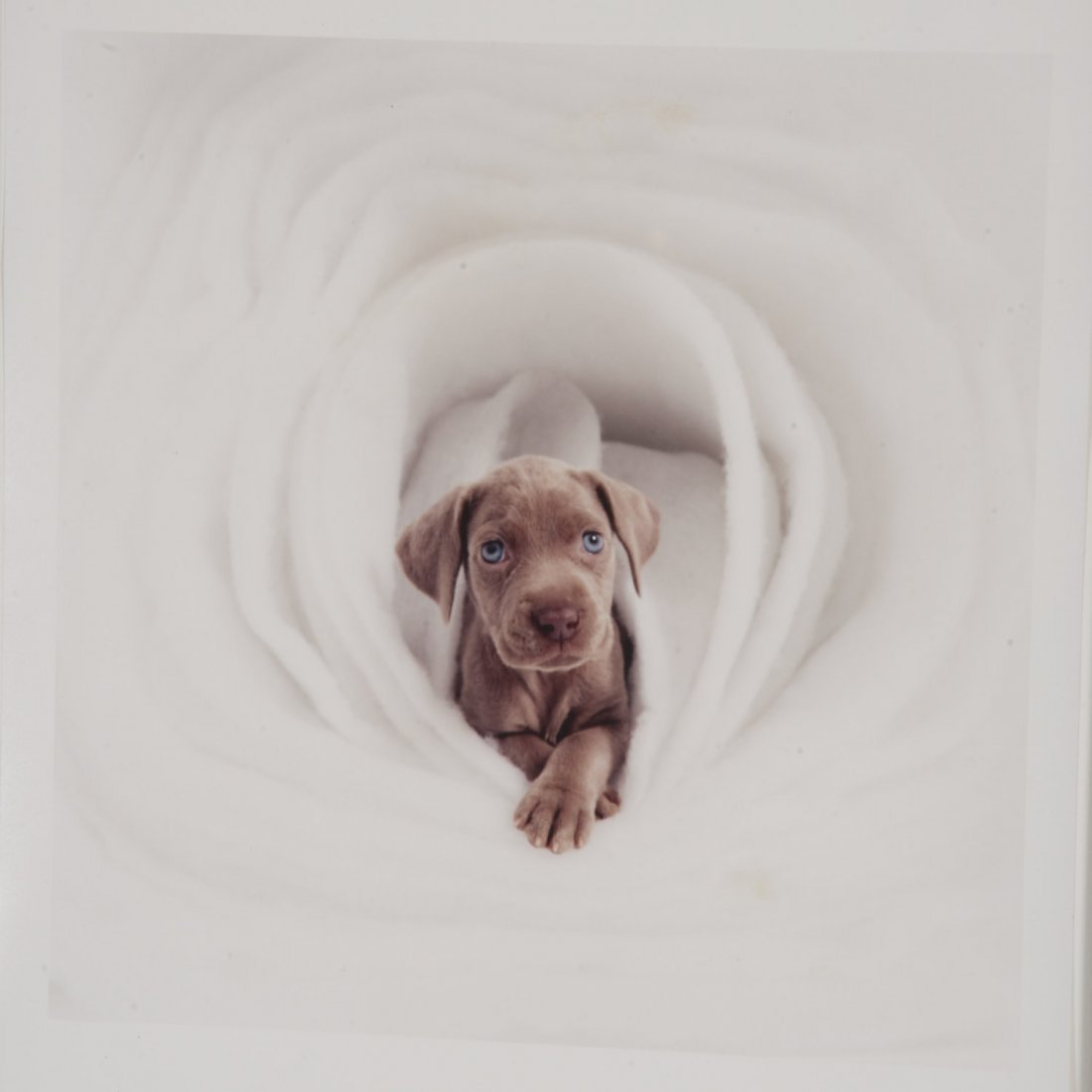 William Wegman, photograph - 2