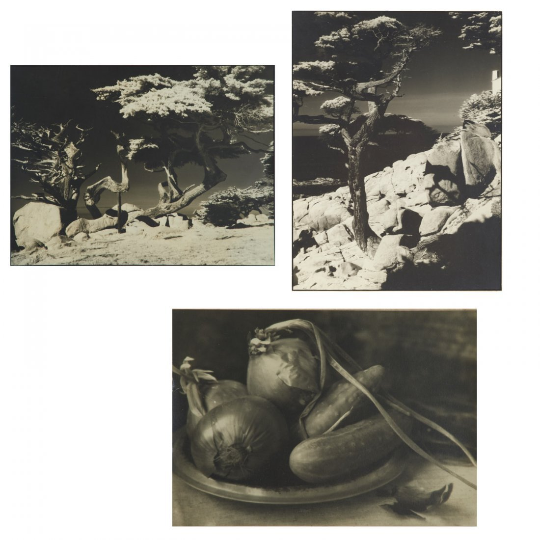 William T. Higbee, (3) photograph prints