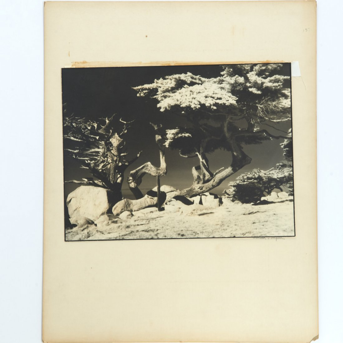 William T. Higbee, (3) photograph prints - 4