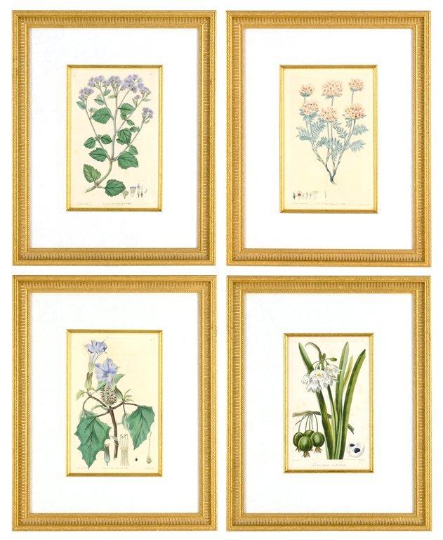 a set of four framed botanical prints