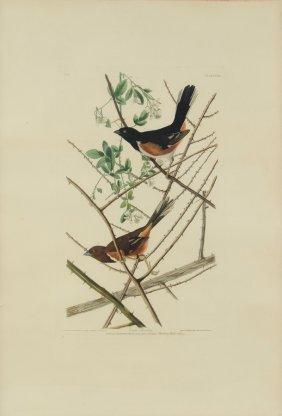 John James Audubon, (american, 1785-1851), Towee