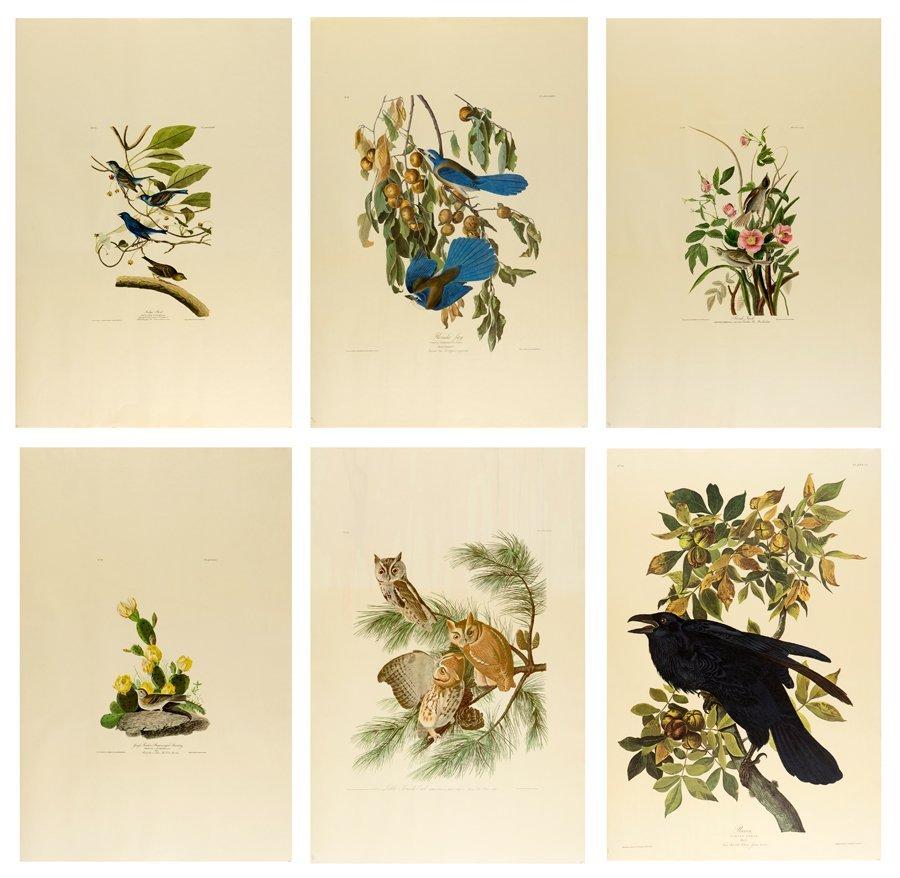 AFTER JOHN JAMES AUDUBON, (American, 1785-1851), Birds